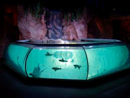 Specialist marine flat fish and ray display