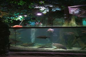 carp-lake-display_0