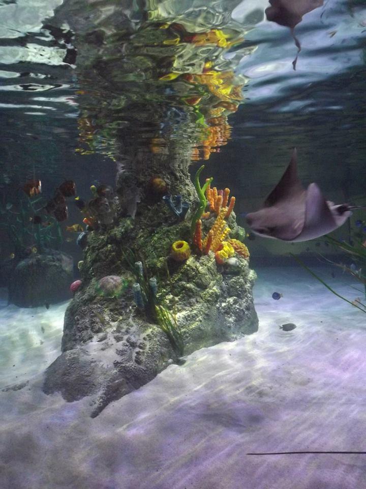 Sea Life Centre Manchester Aquarium Installation